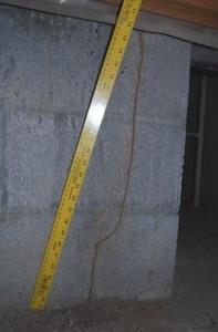 evidence of termites, mud tunnel