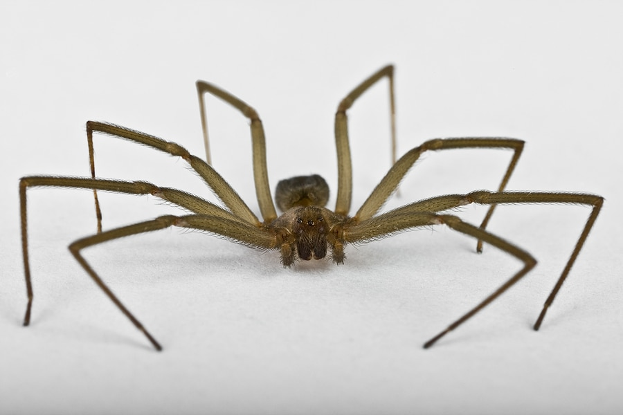 How To Get Rid Of Spiders Bug Amp Weed Mart