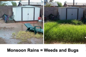 Do-It-Yourself Pest and Weed Control During Monsoon