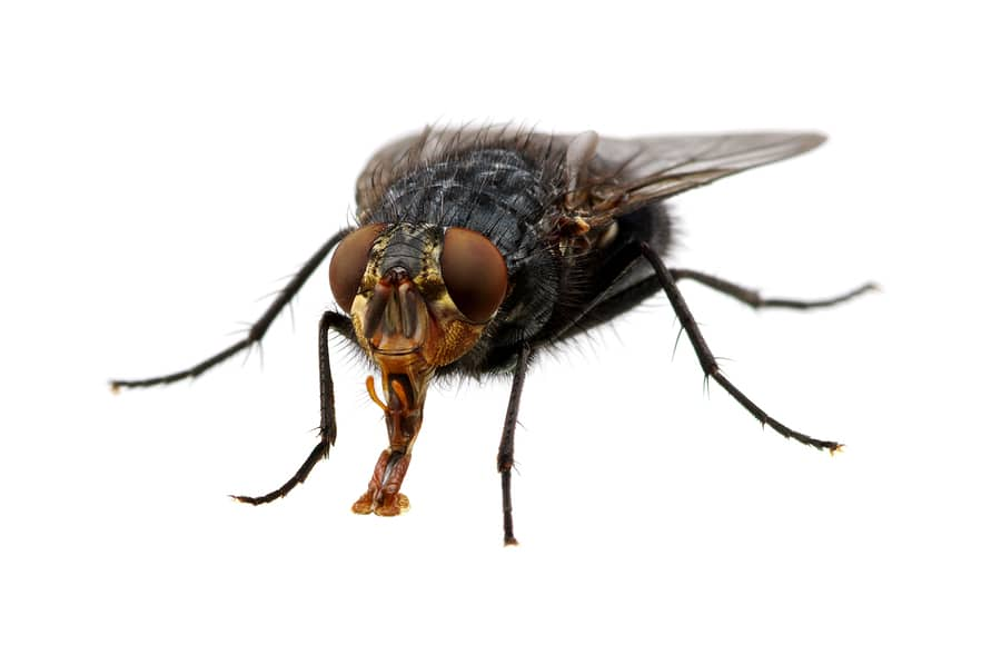 how to get rid of flies outdoor patio how to get rid of
