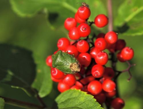 Getting Your Garden Ready for Fall – Garden Pest Control