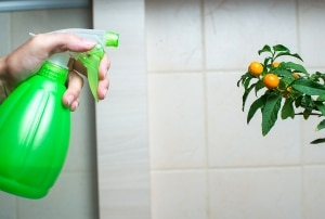 natural pest control products