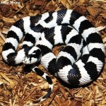 pictures of snakes