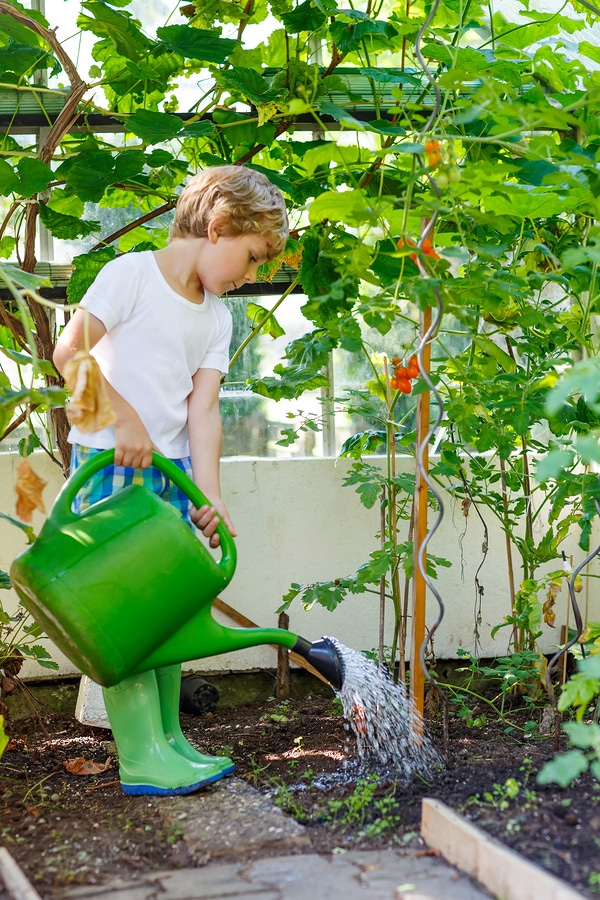 Fall Is The Perfect Time To Plant A Tree Bug Weed Mart