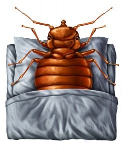 bugs that look like bed bugs