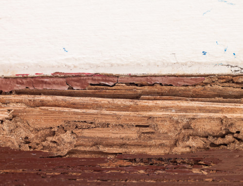 What does termite damage look like?