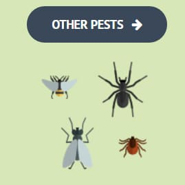 Bug weed mart phoenix do it yourself pest control stores do it yourself pest control is easy solutioingenieria Image collections