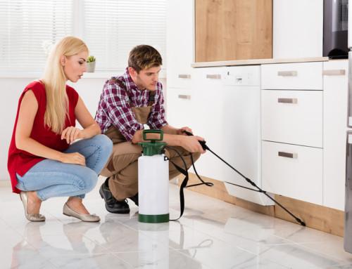Renter v. Homeowner