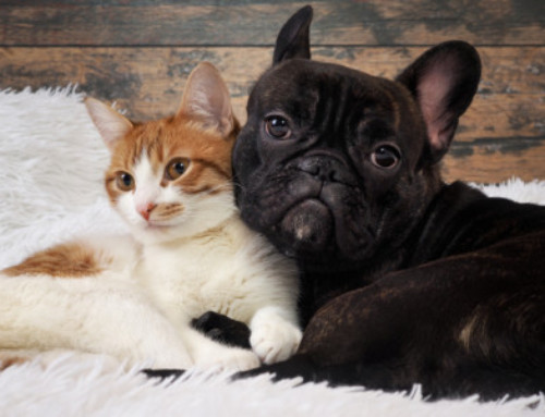 Fleas: Get rid of the pest that's bugging your pet!