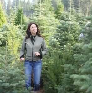Christmas Tree Bugs