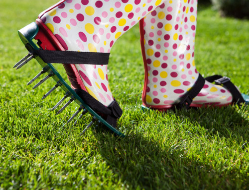 5 Tips to Keep Your Phoenix Lawn Green