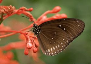 attracting birds butterflies and other backyard wildlife