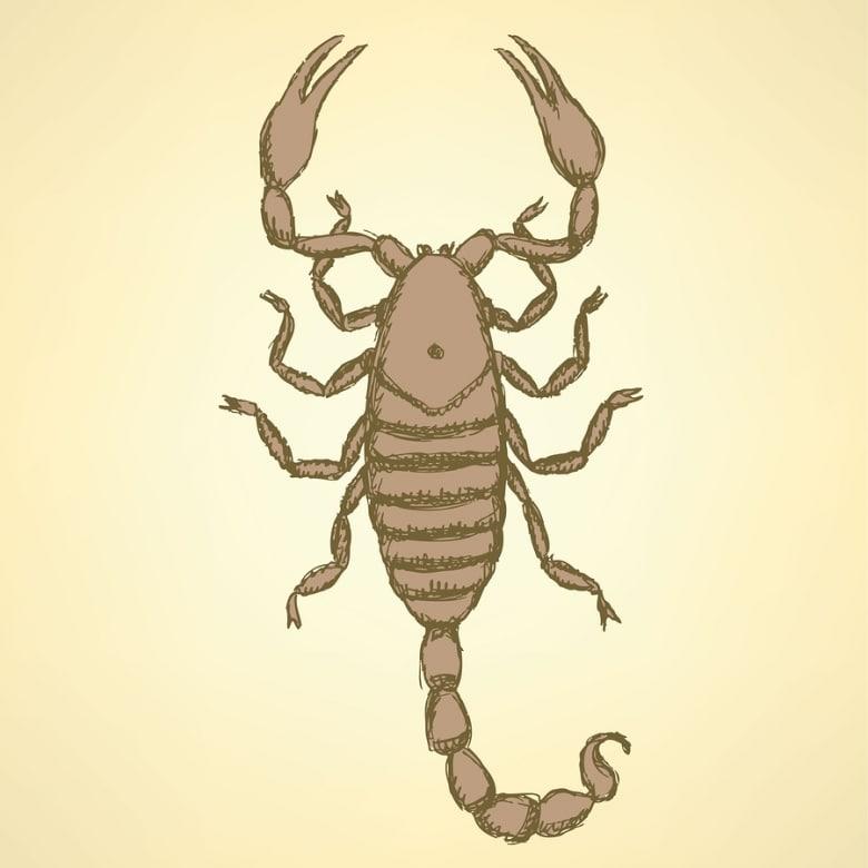 Kill scorpions year 'round