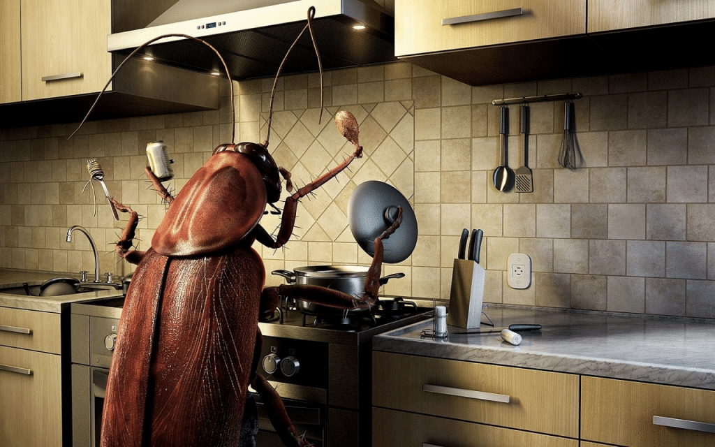 How to get rid of sewer roaches