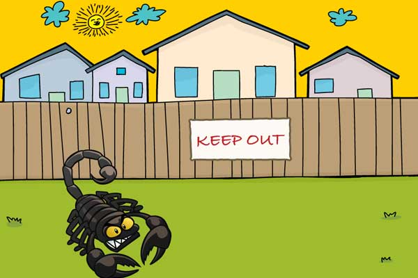 How to Keep Scorpions Out of Your House
