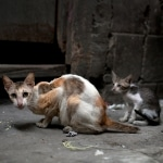 How to Get Rid of Feral Cats