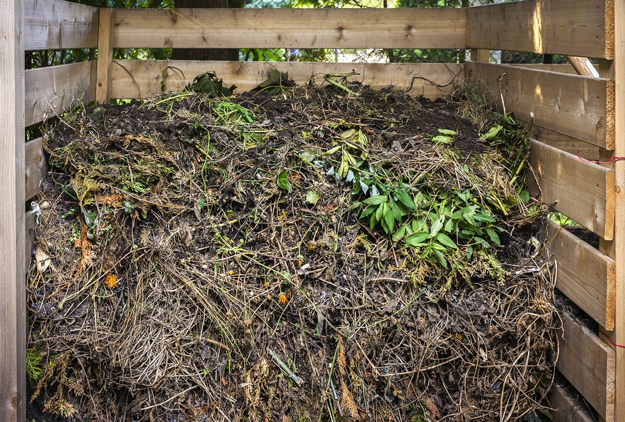 organic garden pest control