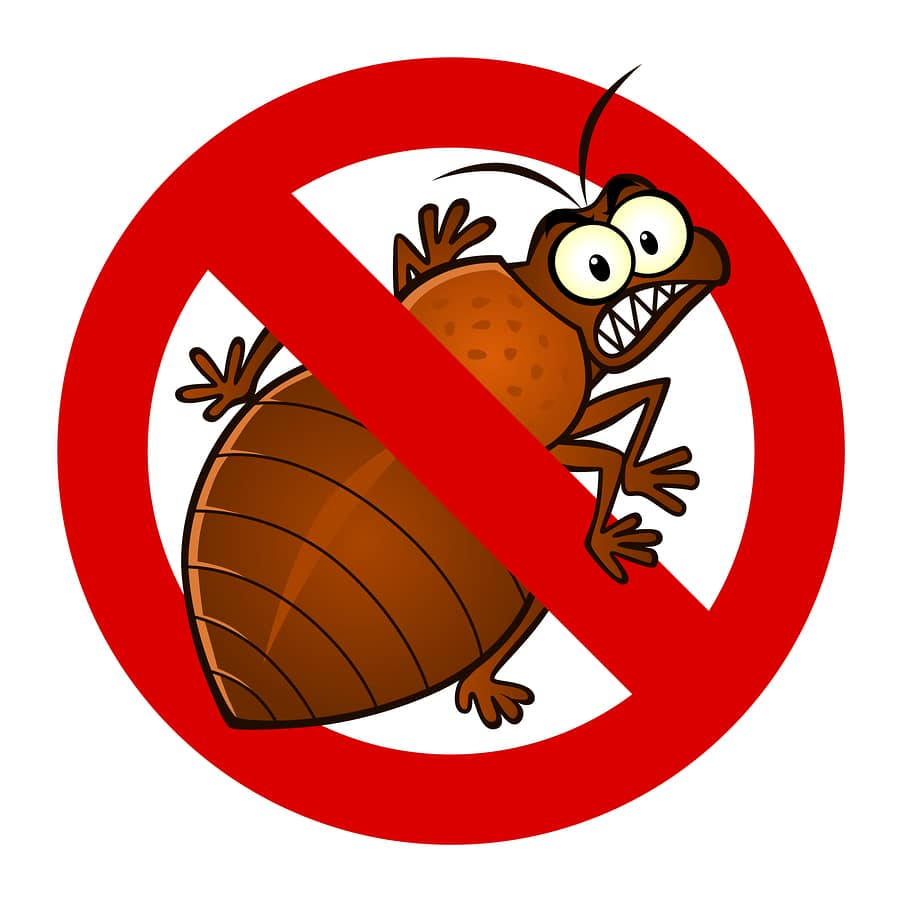 Do Bed Bugs Fly